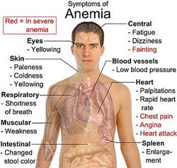 measurement of haemoglobin is mandatory to establish the diagnosis of anaemia